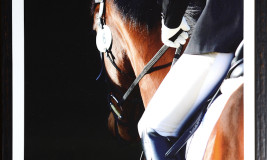 equestrian formal