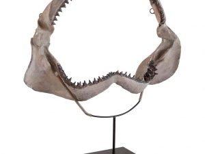shark Jaws I
