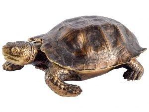 Stylish Turtle