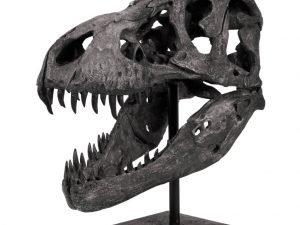 Tyrannosaurus skull