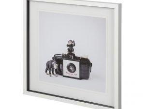 Monkeys & Vintage Camera