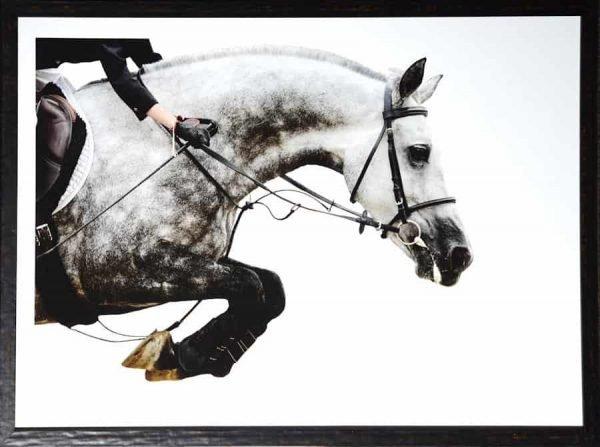 equestrian leap