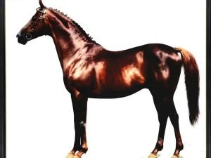 TRAKEHNER CHESTNUT STALLION